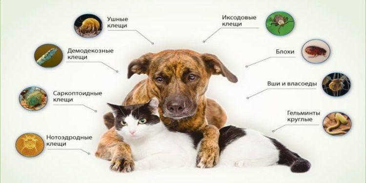 Рекомендации по обработке животных от клещей